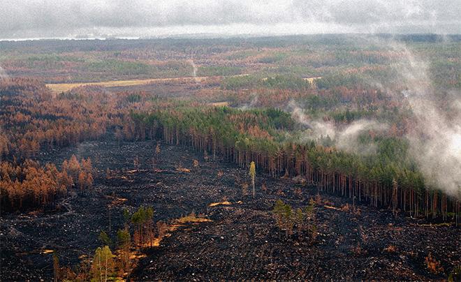 Området som brandskadas motsvarar cirka 25 000 fotbollsplaner. Foto: Kjell Gustavsson