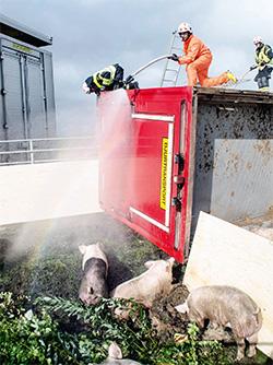 Olycka med gristransport